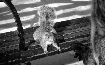 Viele Tierbeobachter glauben, die Eichhörnchen würden erstaunlich oft ihre Vorratslager vergessen. In Wirklichkeit pflanzen sie Bäume für zukünftige Generationen.