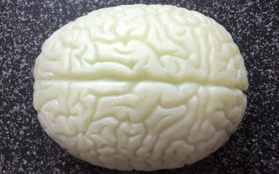 Wir benutzen nur 10 % unseres Gehirns?